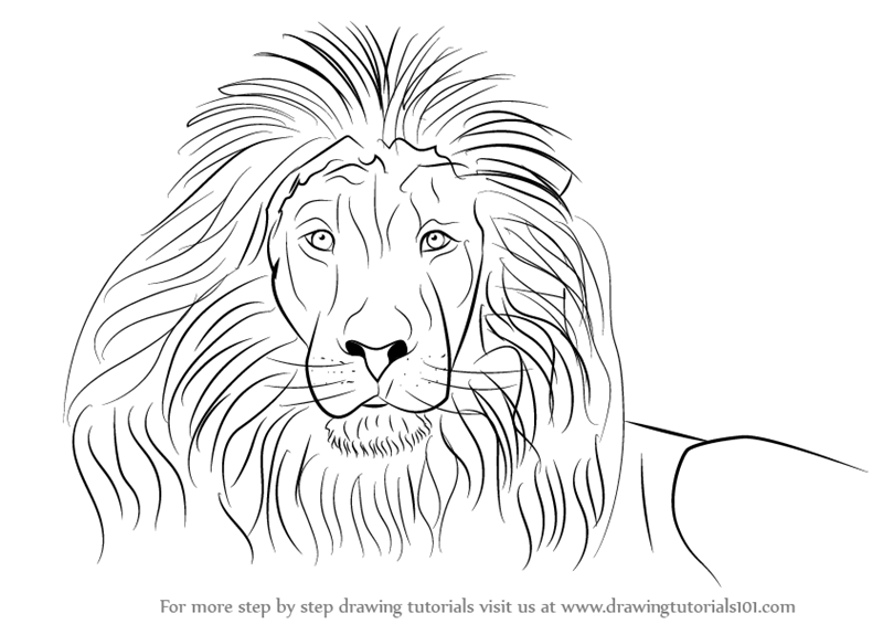 Learn How to Draw a Lion's Face (Big Cats) Step by Step : Drawing ...