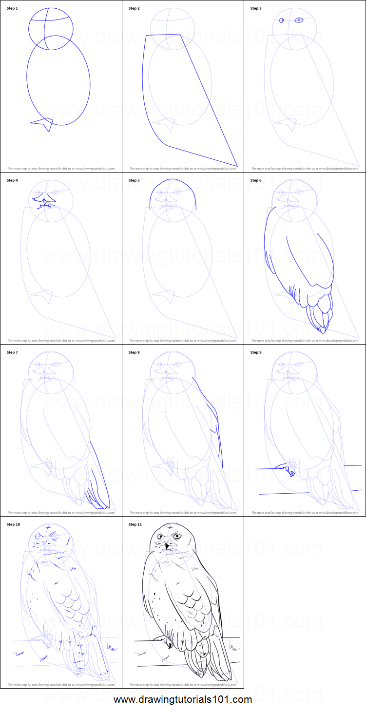 How to Draw a Snowy Owl printable step by step drawing sheet ...
