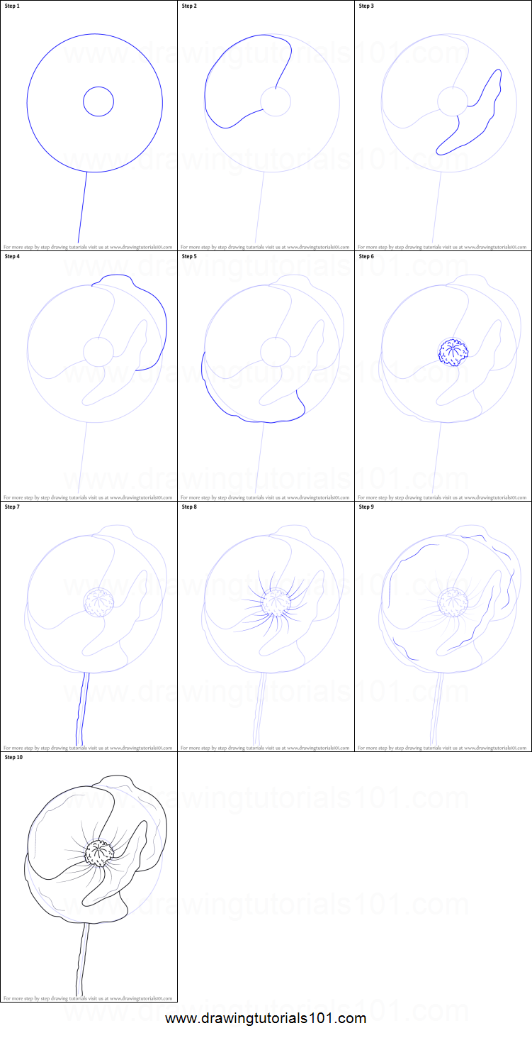 How To Draw Poppy Flower Printable Step By Step Drawing Sheet