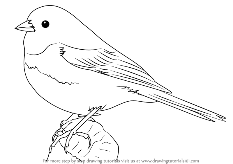 how to draw a bird step by step with pencil