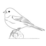 How to Draw a Dark-Eyed Junco