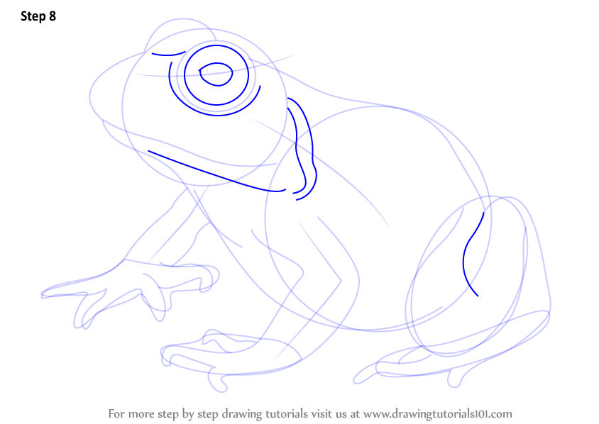 learn how to draw an american bullfrog amphibians step