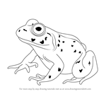 How to Draw an American Bullfrog
