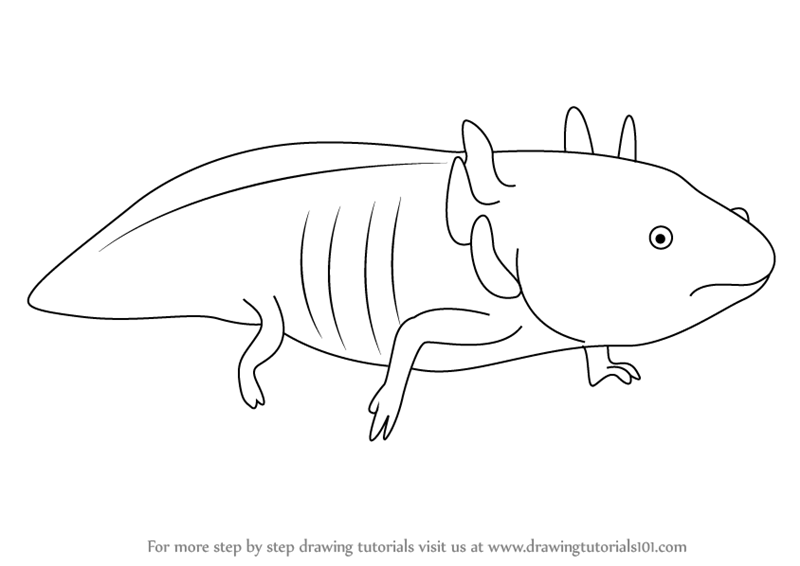 axolotl coloring pages - photo#38