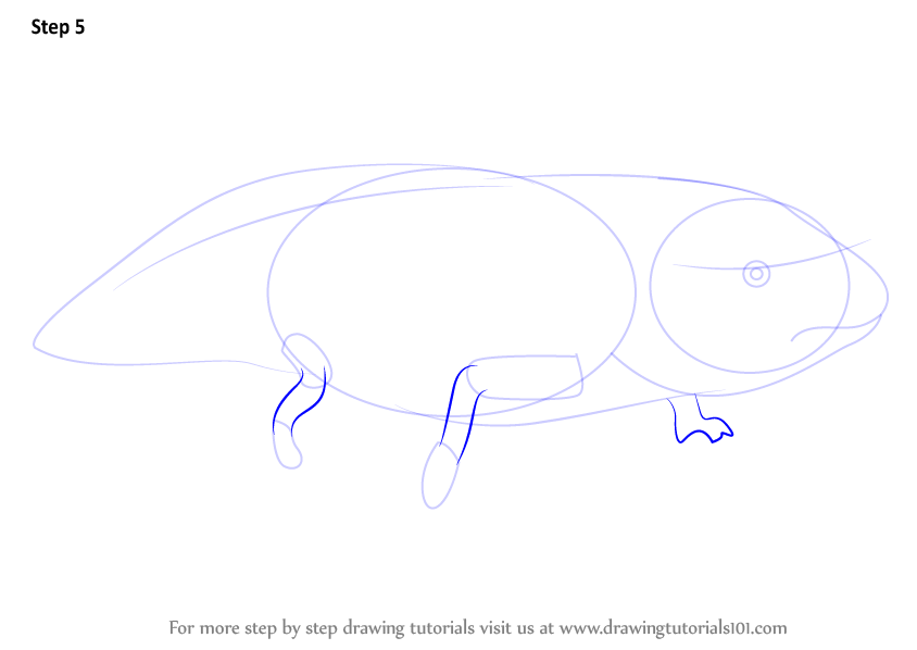 how to draw a bullfrog step by step