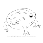 How to Draw a Desert Rain Frog