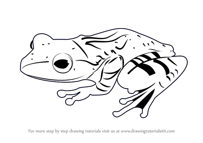 Learn How to Draw a Frog (Amphibians) Step by Step ...