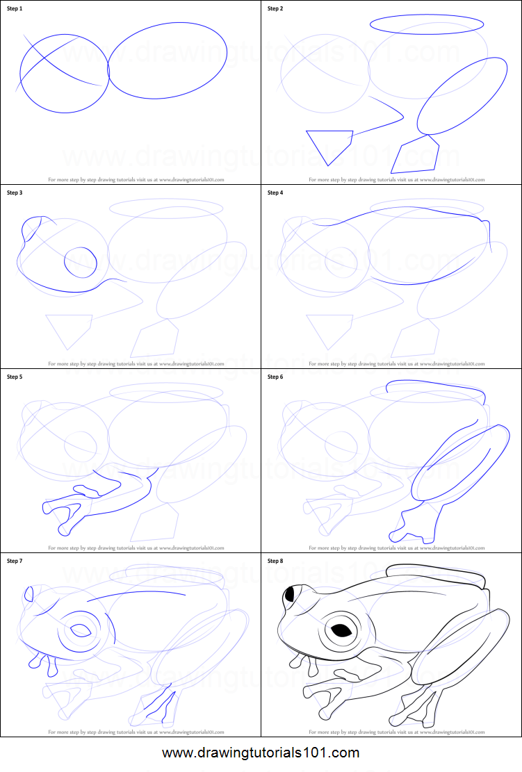 How to Draw a Glass Frog printable step by step drawing ...