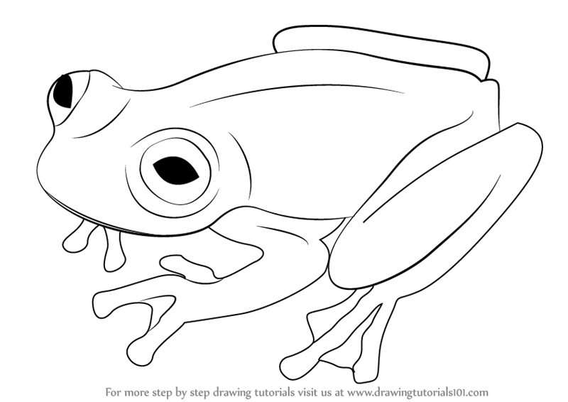 Learn How To Draw A Glass Frog Amphibians Step By Step