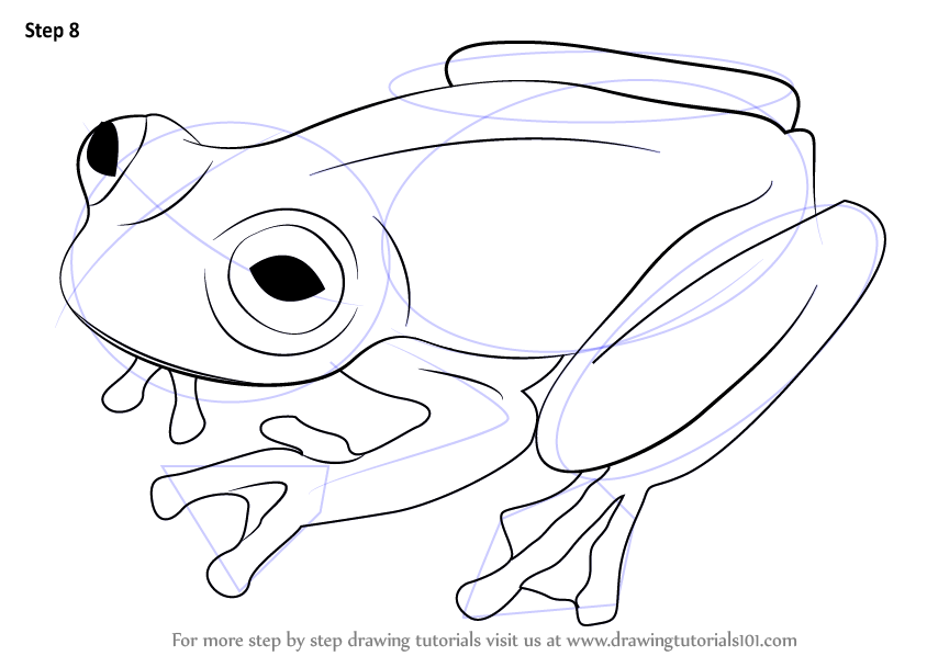 Learn How to Draw a Glass Frog (Amphibians) Step by Step ...