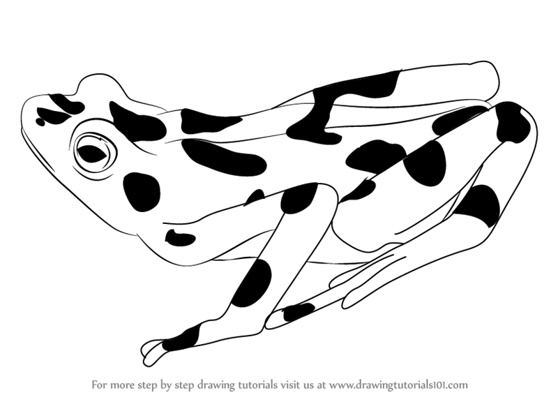 Learn How to Draw a Golden Frog (Amphibians) Step by Step ...