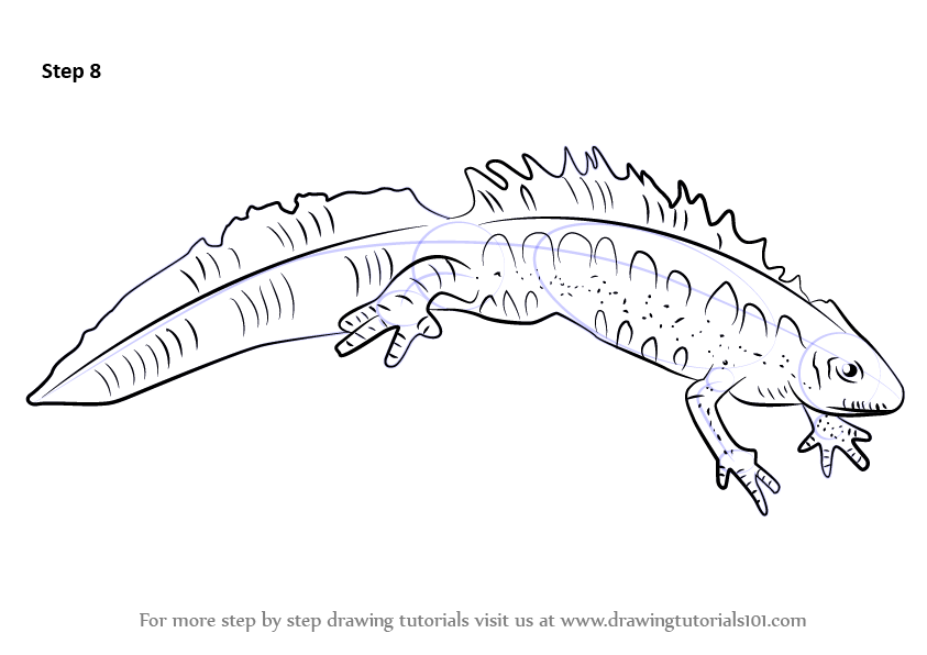 learn how to draw a great crested newt  amphibians  step