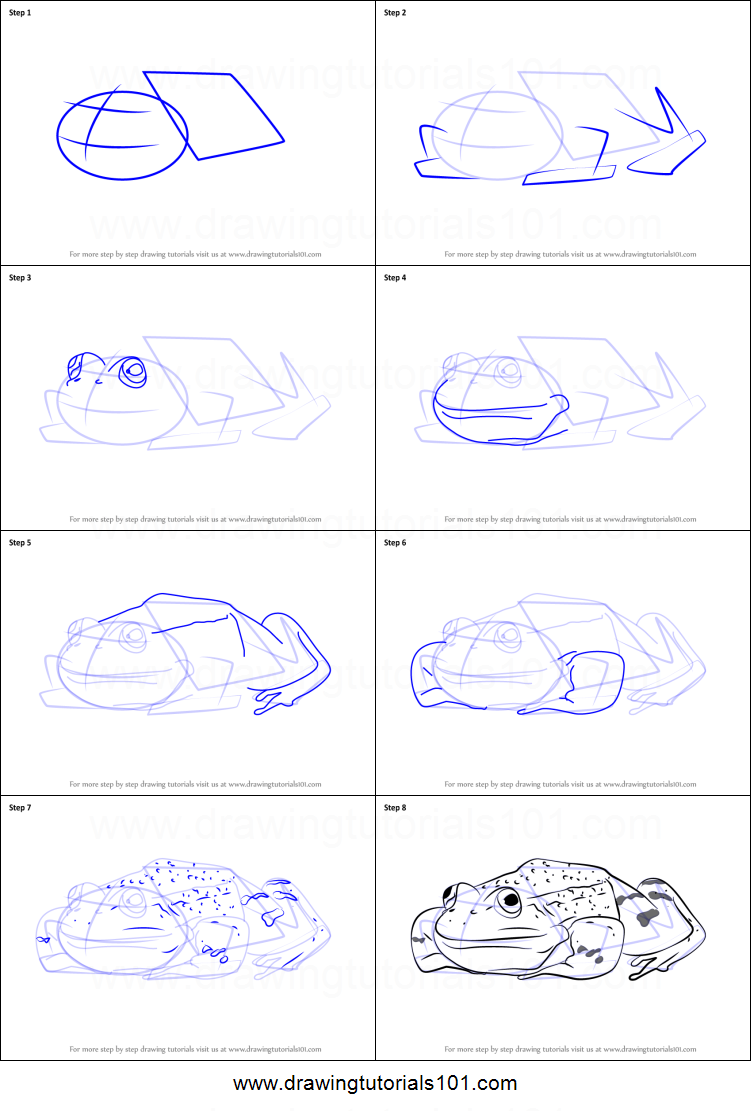 How to Draw a Green Frog Sitting printable step by step ...