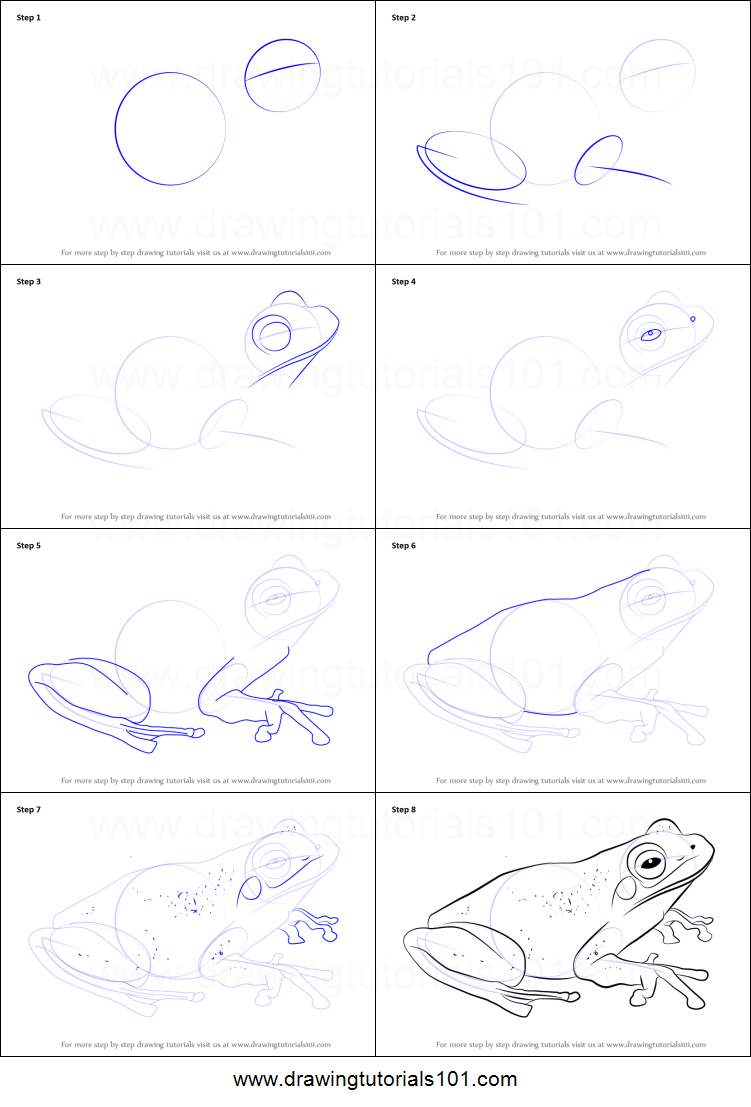 How to Draw a Green Tree Frog printable step by step ...
