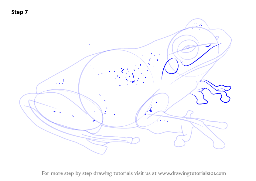 how to draw a toad step by step