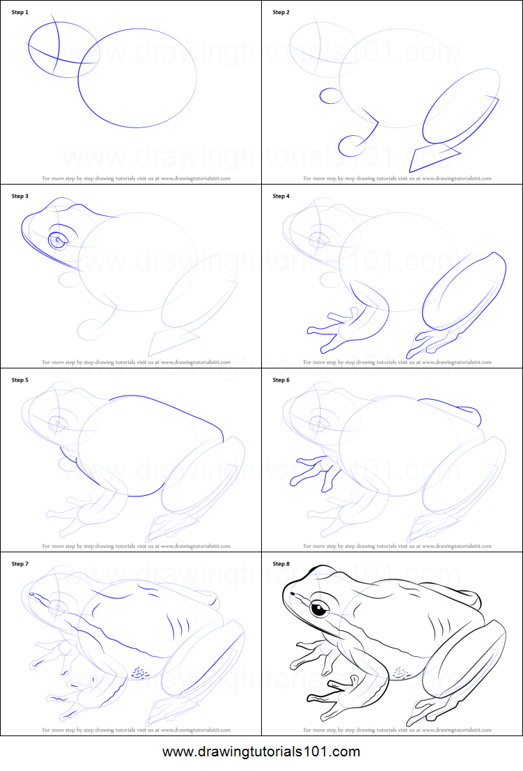 How to Draw a Lemon-Yellow Tree Frog printable step by ...