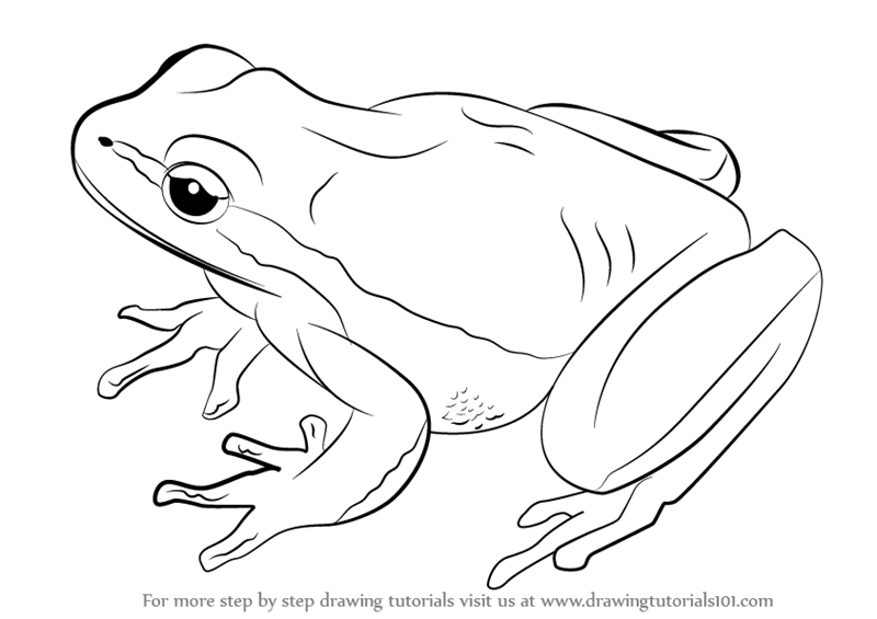 Line Drawing Frog : Frog line drawing