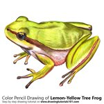 how to draw a tree frog step by step
