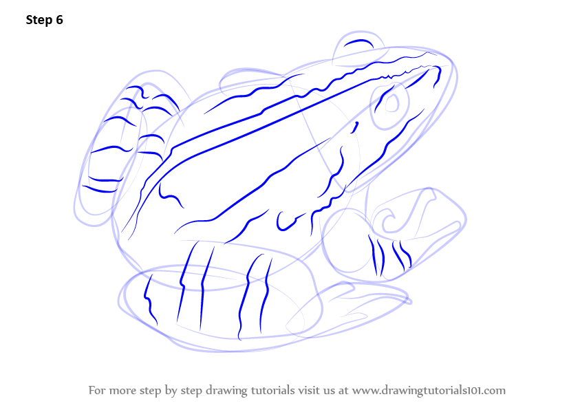 learn how to draw a marsh frog amphibians step by step