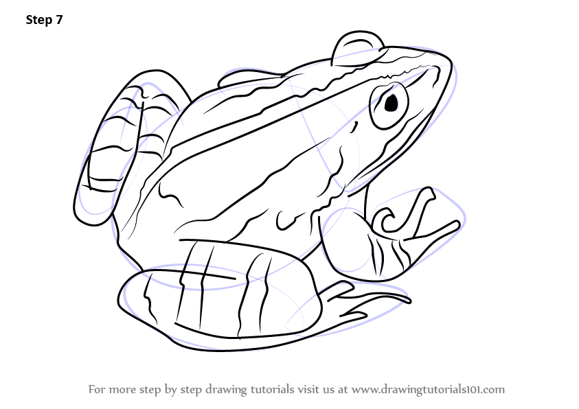 Learn How to Draw a Marsh frog (Amphibians) Step by Step ...
