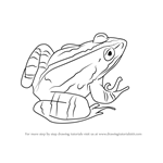 How to Draw a Marsh frog