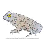 How to Draw a Natterjack toad