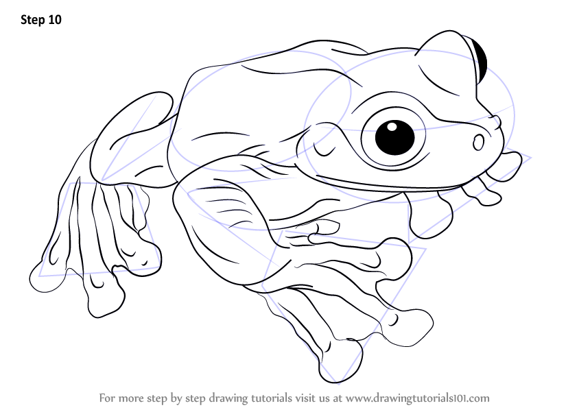 Learn How to Draw a Rabb's Fringe-Limbed Treefrog ...