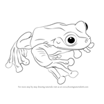 How to Draw a Rabb's Fringe-Limbed Treefrog