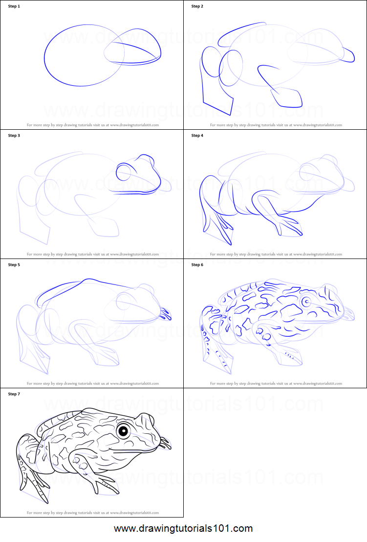 How to Draw a Spotted Marsh frog printable step by step ...