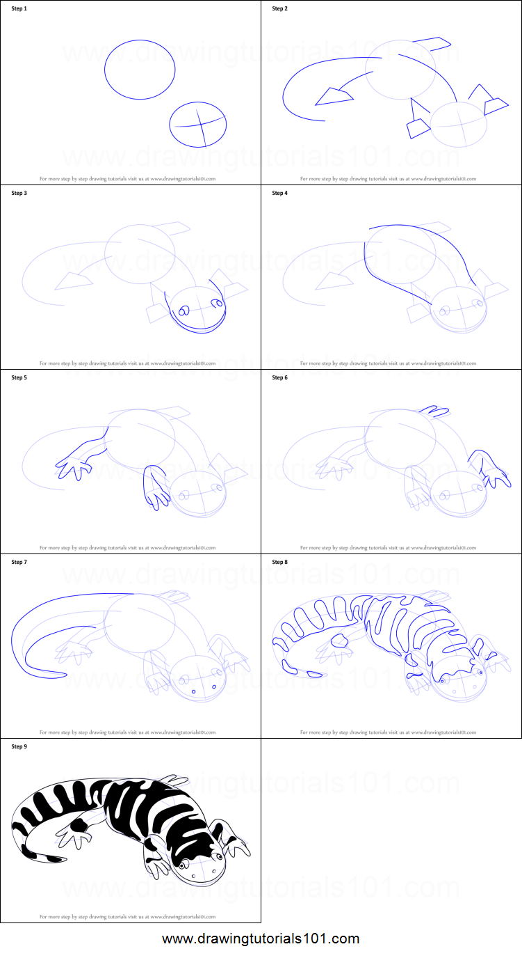 Uncategorized How To Draw A Tiger Step By Step how to draw a tiger salamander printable step by drawing salamander