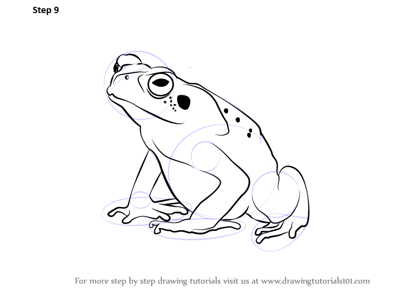 Learn How to Draw a Toad (Amphibians) Step by Step ...
