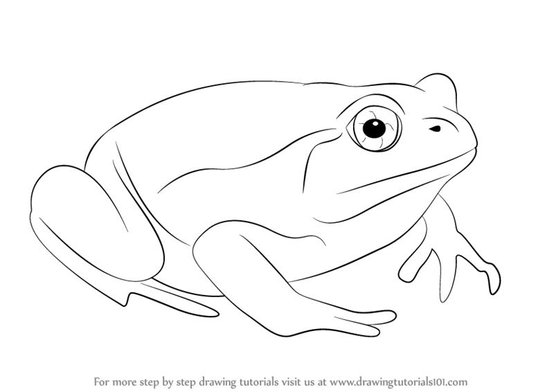 learn how to draw a tomato frog amphibians step by step drawing tutorials