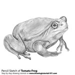 How to Draw a Tomato Frog