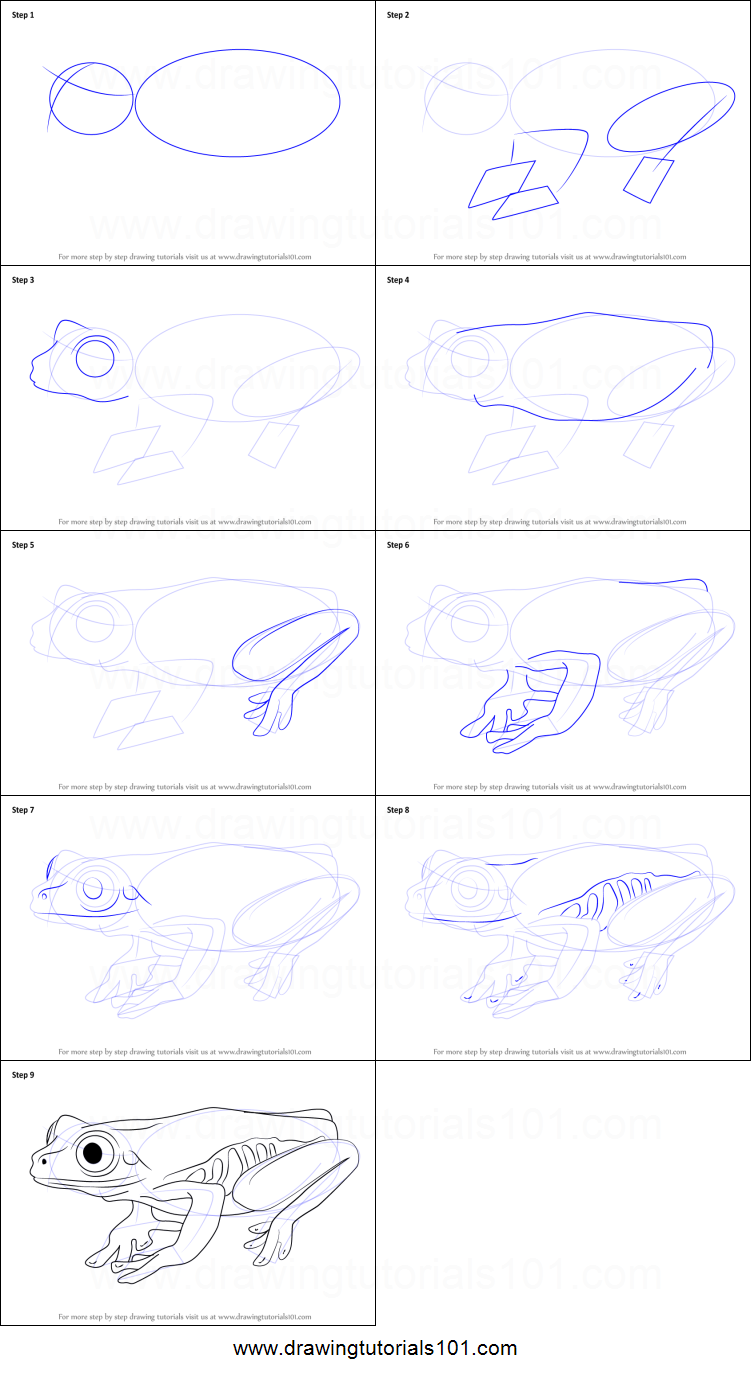 how to draw a tree frog printable step by step drawing sheet