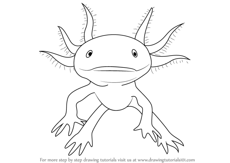 axolotl coloring pages - photo#22
