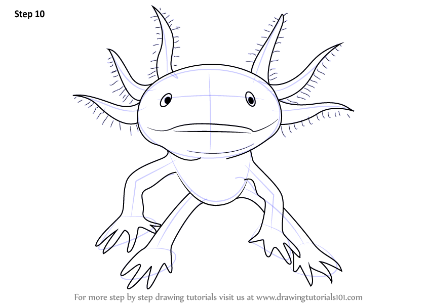 learn how to draw a walking fish amphibians step by step
