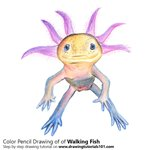 How to Draw a Walking Fish