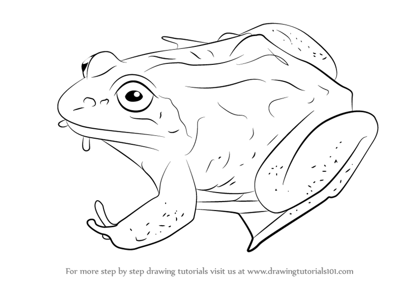 wood frog coloring pages - photo#9