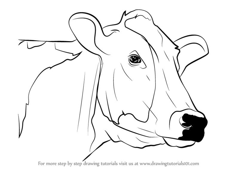 Line Drawing Cow Face : Learn how to draw a cow face animal faces step by