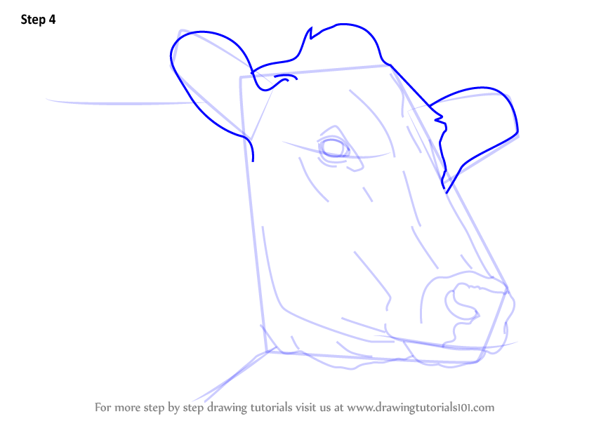 Learn How to Draw a Cow Face (Animal Faces) Step by Step