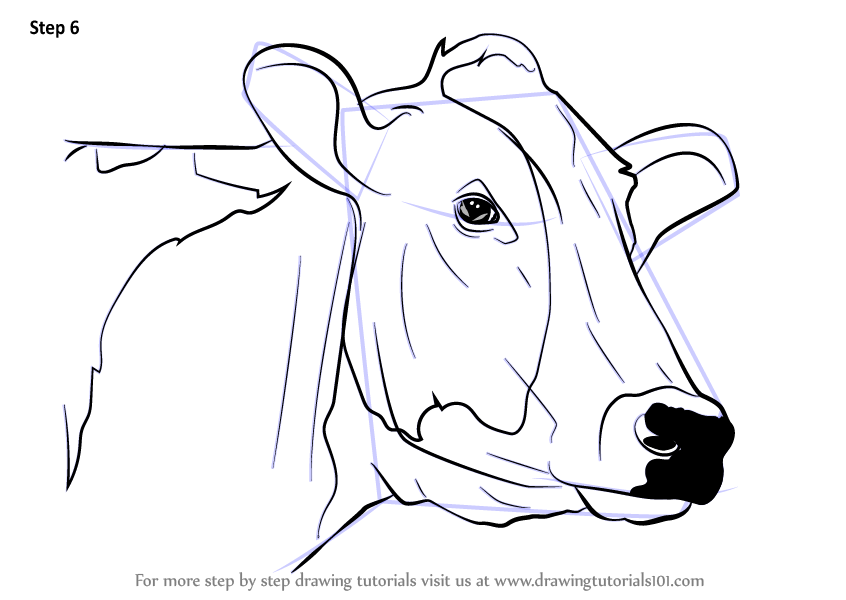 Draw Easy Cow Face Best Photos Of Cow Pnpimage Org