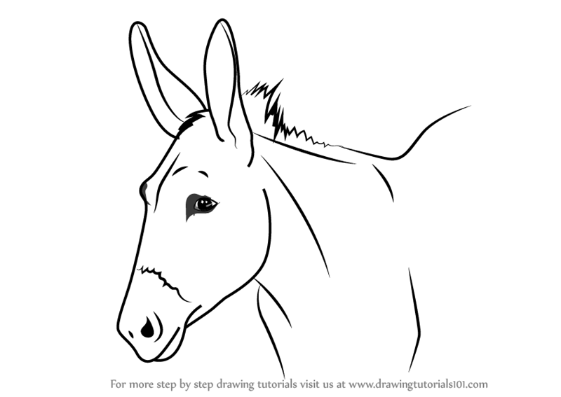 Learn How To Draw A Donkey Face Animal Faces Step By Step