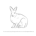 How to Draw a Arctic Hare