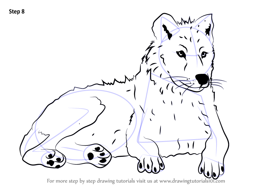 learn how to draw an arctic wolf  antarctic animals  step by step   drawing tutorials