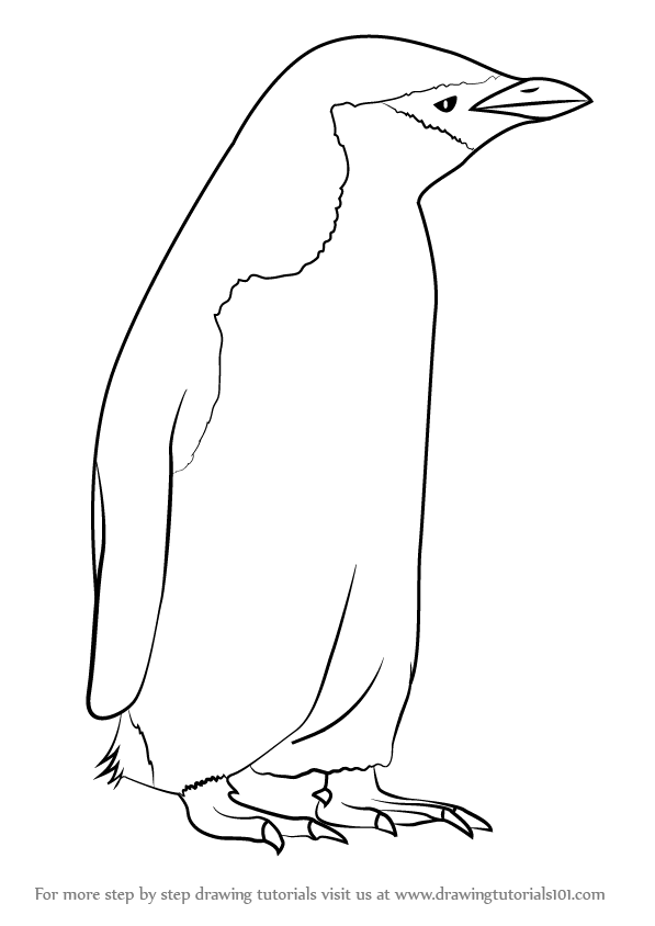 Learn How to Draw a Chinstrap Penguin
