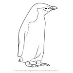 How to Draw a Chinstrap Penguin