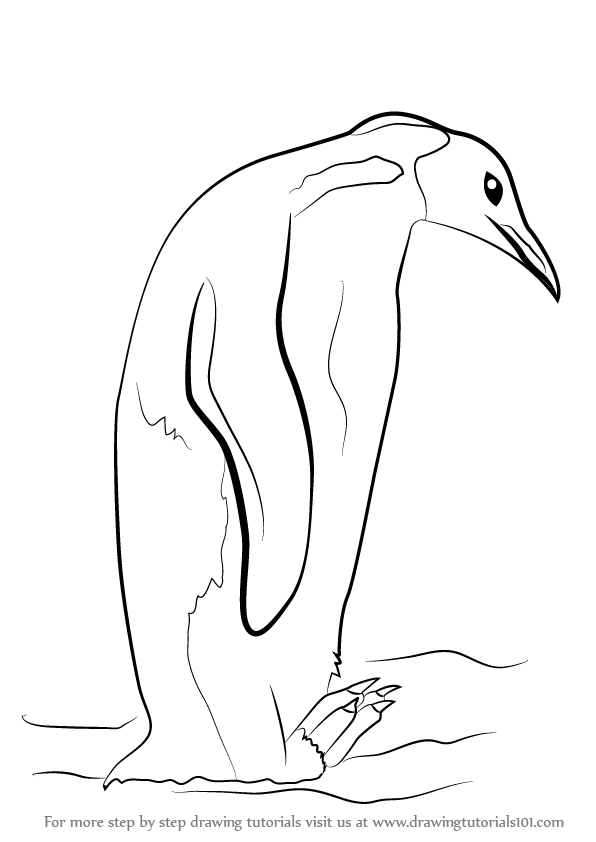 Learn How to Draw an Emperor Penguin