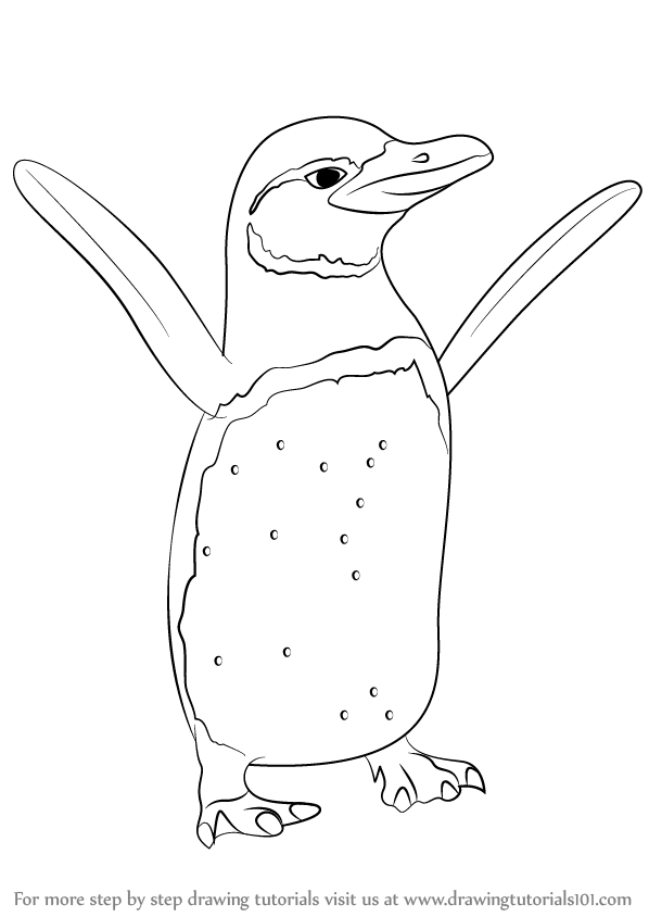 Learn How to Draw a Galapagos Penguin