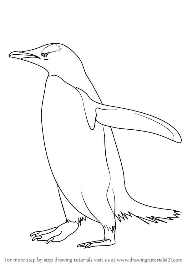 Penguin Drawings For Kids Learn How to Draw a Ge...