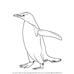 How to Draw a Gentoo Penguin
